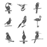 Bird Black Icons Set Stock Image