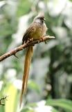 Bird. In Blijdorp Zoo Rotterdam stock image