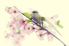 Bird on Blossom Branch. Colorful bird perched on a branch with blossoms Stock Photo