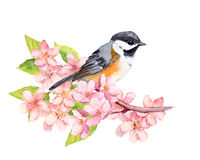 Bird on blossom branch with flowers. Watercolor Stock Image