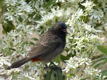 Bird blossoms Stock Photos