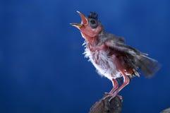 Bird blue background flying stock image