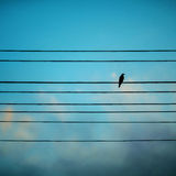 Bird on a blue background Royalty Free Stock Image