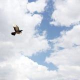 Bird. Into the blue sky Royalty Free Stock Photos