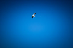 Bird in the blue sky Stock Image