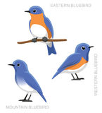 Bird Bluebird Set Cartoon Vector Illustration Royalty Free Stock Photos