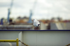 Bird on a boart Royalty Free Stock Photography
