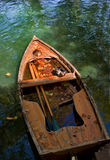 Bird in boat. Boat drowned in a canal, covered with autumn leaves Royalty Free Stock Image