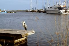 A bird in a boat dock. Boat dock in Volendam Netherlands royalty free stock photos