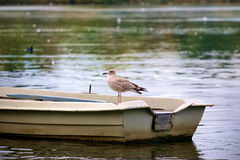 Bird on a Boat Royalty Free Stock Photos
