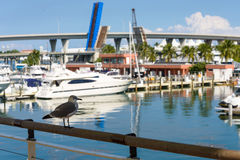 Bird boats port. Bird with boats in miami port Stock Images
