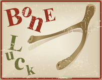 Bird bone superstitious recognized bone luck Stock Images