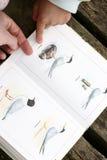Bird book Royalty Free Stock Photo