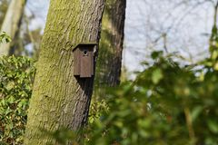 Bird booth hung on a tree. Home for birds royalty free stock photos