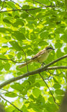 The bird - borlaug Royalty Free Stock Photography
