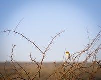 Bird in Botswana Africa Royalty Free Stock Photography