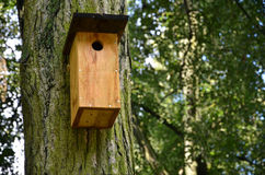 Bird box in the forest. Bird box on the oak tree in the forest Royalty Free Stock Images
