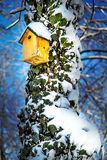 Bird Box on a tree covered with Ivy and Snow on blue sky background. Facing the afternoon sun Royalty Free Stock Photos