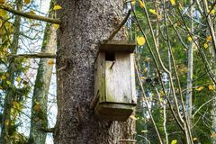 Bird box on tree in forest Royalty Free Stock Photo
