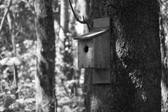 Bird box on tree in woodland Stock Image
