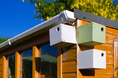 Bird boxes on garden shed Stock Image