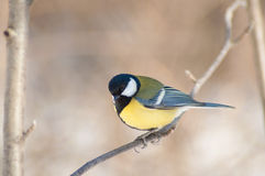 Bird on branch Stock Photography