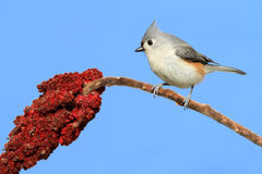 Bird On A Branch Royalty Free Stock Images