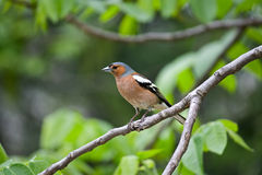 Bird on a branch Stock Image