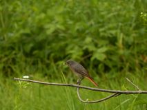 Bird. On branch Royalty Free Stock Image