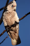 Bird on branch in Australia Stock Images