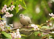 Bird, Branch, Beak, Blossom Royalty Free Stock Photo