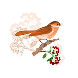 Bird on a branch with berries vector Stock Image