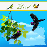 Bird on branch and bird flying in the sky Royalty Free Stock Photos