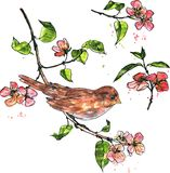 Bird at branch with blossoms Stock Image