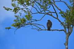 Bird on a Branch in the Florida Everglades. Scenery from the Florida Everglades Stock Image