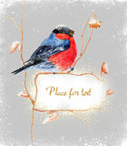 Bird on a branch. A greeting card. Royalty Free Stock Image