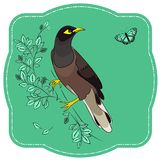 Bird on a branch hunting a butterfly. Vector illustration of a bird on a branch with green leaves hunting a butterfly. Vintage Label with Myna bird mint Stock Images
