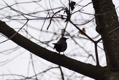 Bird in the branch Royalty Free Stock Images