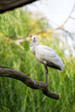 Bird on branch Royalty Free Stock Images