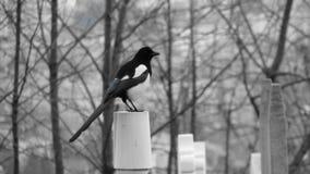 Bird on Branch in Odessa, Ukraine Royalty Free Stock Photography