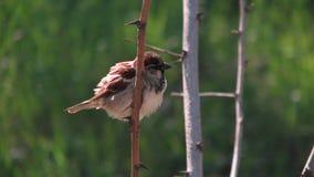 Bird on Branch in Odessa, Ukraine Royalty Free Stock Photo