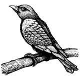 Bird on a branch. Retro illustration of the bird on branch stock illustration
