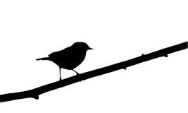 Bird on branch. Robin bird on branch, silhouette Stock Images