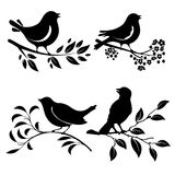 Bird on branch. Set of birds silhouettes on a branch Stock Photos