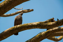 Bird on Plant. A Bird singnin and watching on a branch royalty free stock images