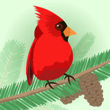 Bird on branch. The bird sits on the branches of Christmas trees vector illustration Stock Image