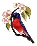 Bird on the branch. Bird sitting on the blossom sakura branch royalty free illustration
