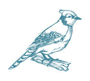 Bird on branch sketch blue vintage. Vector illustration eps 10 Stock Image