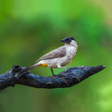 Bird on branch. Stock Photo