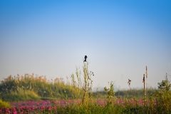 Bird On the branch Swamp pond Royalty Free Stock Image